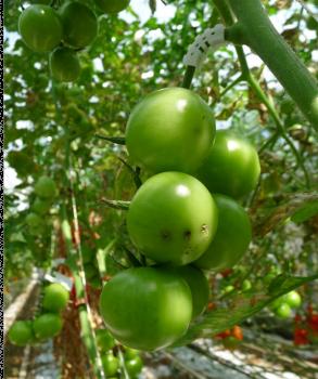 fruit voor bedrijven